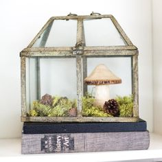 An old lantern, wooden mushroom, fake moss, pine cones - a care-free terrarium.