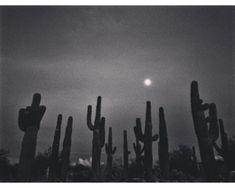 "kvtes: ""one month. Blue Harvest, Desert Dream, Strike A Pose, Mother Nature, Deserts, Blues, Black And White, American, Concert"