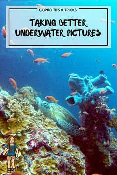 Top 7 Tips For Taking Better Underwater Photos - Robyn Around The World