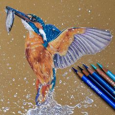 Picture of a Common Kingfisher drawn using colored pencils. Drawing a kingfisher with coloured pencils. Realistic Animal Drawings, Bird Drawings, Pencil Art Drawings, Colorful Drawings, Art Sketches, Colored Pencil Artwork, Color Pencil Art, Coloured Pencils, Common Kingfisher