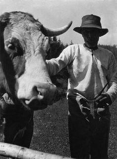 A jószág volt az aranya a népnek. Budapest, Westerns, Cow, Retro, Animals, Ukraine, Life, Travel, Photos