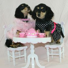 Dont look now, but you wont believe what that poodle is wearing!