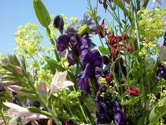 zomerbloemen plukken Annemieke's pluktuin in Hillegom