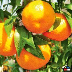 #Naranjo #Terraza #Jardin