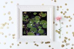 Water Lily Photo  Fine Art Photography Nature Wall by Camerallure, $15.00