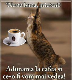 Mihaela Lazar - Google+ Morning Coffee, Good Morning, Motivational Words, Brown Bear, Humor, Antiques, Funny, Animals, Romania