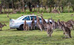 <3 Car-jacking, Australian-style:-)