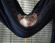 Hammock Rat is having an awesome Saturday, thank you