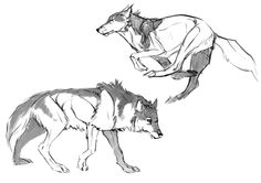 A couple wolf sketches from refs - Jade Mere Animal Sketches, Animal Drawings, Art Sketches, Art Drawings, Wolf Drawings, Anime Wolf, Wolf Sketch, Animal Design, Creature Design