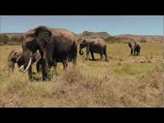 Quadrotor Drones Get Intimate with African Animals