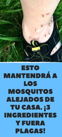 Esto mantendrá a los mosquitos alejados de tu casa. ¡3 ingredientes y fuera plagas!