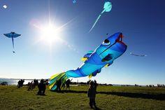 Huge Kites Are Flown During Matariki Festival
