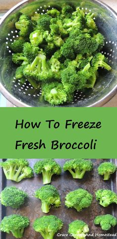 To Freeze Fresh Broccoli There's nothing like freezing fresh broccoli straight from your garden!There's nothing like freezing fresh broccoli straight from your garden! Freezing Vegetables, Frozen Vegetables, Fruits And Veggies, Freezing Broccoli, Freezing Fruit, How To Freeze Broccoli, Food To Freeze, Freezing Celery, Dining