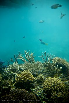 Great Barrier Reef, Australia.  I was lucky to dive the reef. Beautiful.