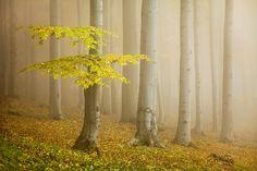 Fairytale forest by Daniel Řeřicha, www.facebook.com/pages/Photographer-Daniel-Řeřicha/141419165885869