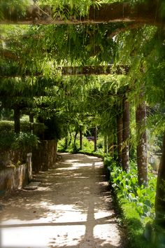 Garden path in Portugal