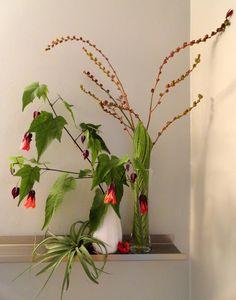"""jardim perigo: em um vaso na segunda-feira: """"Eu não posso simplesmente jogá-los fora"""" edição ..."""