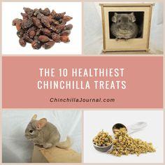 The 10 Healthiest Chinchilla Treats