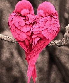 love birds <3 <3 <3 <3 <3 <3 <3