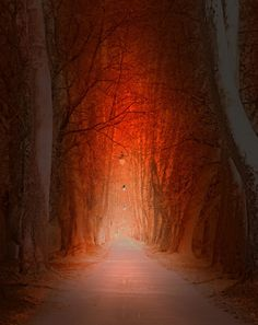 Pathway by Mevludin Sejmenovic #xemtvhay