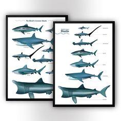 Shark poster print - marine fish poster - wall art - home decor print Poster Wall, Poster Prints, Art Calendar, Marine Fish, High Quality Wallpapers, Etsy Uk, Printed Materials, Wall Prints, Shark