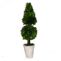 Preserved Boxwood Cone Topiary Mixed 24' *** You can get more details by clicking on the image.