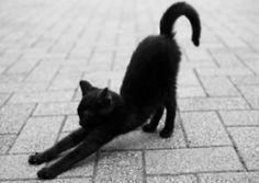 c-apucine:    un tel chat mignon