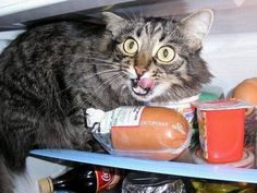 Opening your fridge door to find your confused but well fed cat suffering from a mild case of hyperthermia or when you start leaving your bunch of keys in your the door when you go shopping.