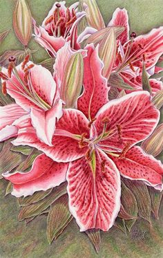 Colored Pencil Paintings by artist Kristy Kutch