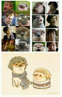 Sherlock 30 Day Challenge Day Seventeen: 'Favourite Thing the Fandom has Created' John and Sherlock as an Otter and a Hedgehog.