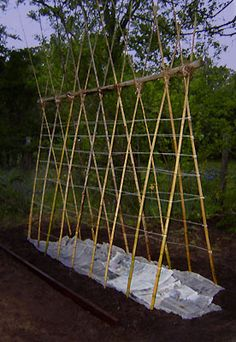 Teepee Trellis for Cucumbers and Peas.  DIY out of bamboo and cotton strings.