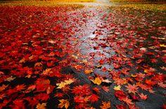 Come fotografare l'autunno. Tutti i suggerimenti