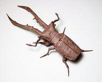 L'entomologie accessible sous Creative Commons http://cursus.edu/dossiers-articles/articles/21149/entomologie-accessible-sous-creative-commons/
