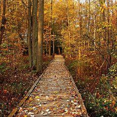 Fall Walk - Guelph Ontario Canada #art #photography #fall #autumn #nature #walk #decor #artforsale