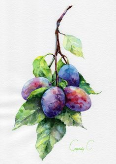 Svetlana is professional watercolor artist that has been painting for over 30 years, specializing in florals, landscapes and subject of nature. This is a professional photo print of original watercolor painting. Watercolor Fruit, Fruit Painting, Watercolour Painting, Watercolor Flowers, Painting & Drawing, Paintings Of Fruit, Botanical Art, Botanical Illustration, Watercolor Illustration
