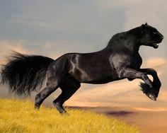 PAN-THORSE