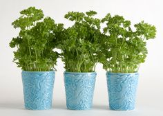 Persiljan kasvatus Vegetable Garden, Planter Pots, Sweet Home, Vegetables, Flowers, House Beautiful, Vegetables Garden, Vegetable Recipes, Vegetable Gardening