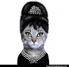 Breakfast at Tiffany's Cat ... Click to see more #FunnyPics & #quotes
