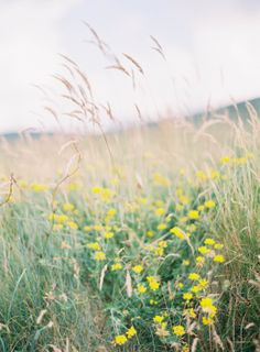wildflowers   field   natural   rustic   jen huang photo   wedding photography