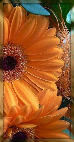 ★ Fresh Orange ★ ~Sensuelle's Picture Book~