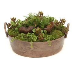 Distinctive Designs Succulents and Moss Silk Plant - 1992
