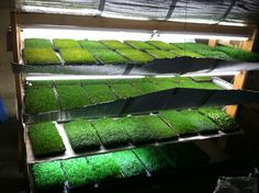 Microgreens Business Plan - Friends of Permaculture BC - Local Business Plans