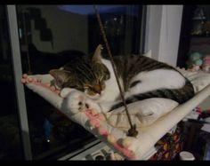 Fenster-Katze-Hängematte mit Kissen von jinstan auf Etsy