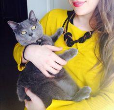 Gatito azul ruso