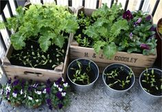 Even humble wood crates look great on an apartment balcony garden.