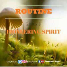 Routine is the killer of pioneering spirit