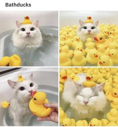 Cute Overload: Internet`s best cute dogs and cute cats are here. Aww pics and adorable animals. Cute Funny Animals, Cute Baby Animals, Funny Cute, Animals And Pets, Hilarious Sayings, Funny Memes, 9gag Funny, Nature Animals, Memes Humor