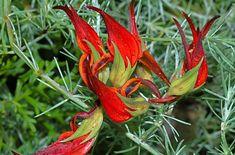 LOTUS – ŠTÍROVNÍK - Zahrádkářův rok Lotus, Garden, Flowers, Plants, Lotus Flower, Garten, Lawn And Garden, Gardens, Plant