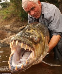 Goliath tigerfish caught by angler Jeremy Wade. Jeremy Wade is a British television presenter and author of books on angling. He is known for his television series River Monsters and Jungle Hooks. My kids love watching him! Jeremy Wade, Haha Funny, Funny Memes, Hilarious, Funny Stuff, Scary Stuff, Creepy Things, Strange Things, Funny Things