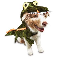 The Bootique Later Gator Dog Costume is a getup made for snapping up and capturing fun Halloween memories with your pup. Complete with an alligator smile, this costume is made to thrill and delight this season. Pet Halloween Costumes, Pet Costumes, Dog Halloween, Halloween Ideas, Zero Dog Costume, Large Dog Costumes, Wizard Of Oz Dog, Wild Bird Food, Dog Store